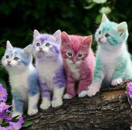 kucing+warna+warni
