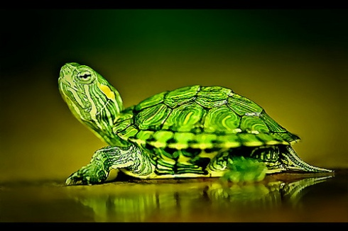 habitat kura-kura