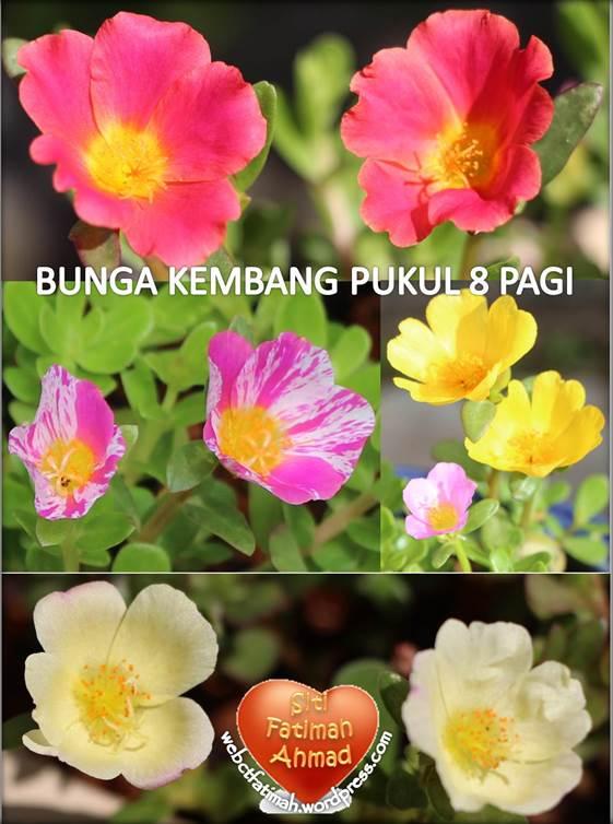 KembangFatima29BungaFatima2