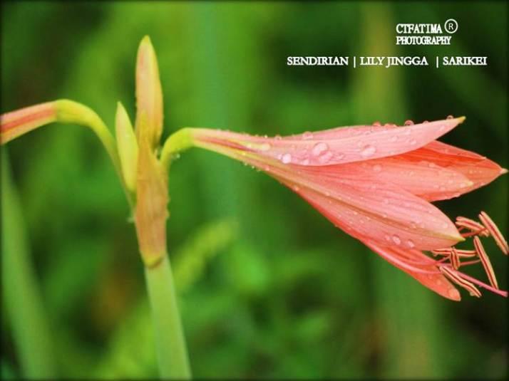 LilyFatima8Sendirian