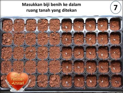 MatahariFatima8TanamBijiMatahari7