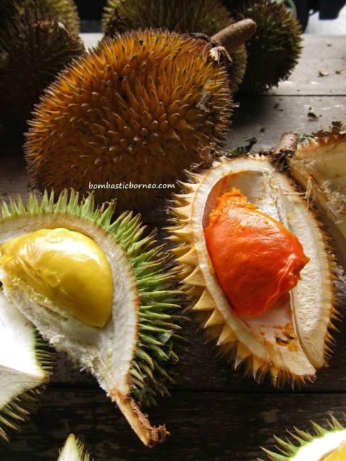 Borneo-Wild-Durian-Isu-Pakan-Fruit-Sarawak-Malaysia