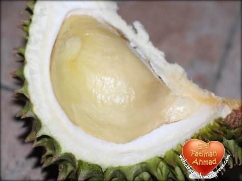 DurianFatima8UlasSingle