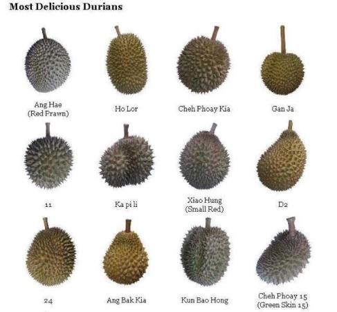 nama durian malaysia