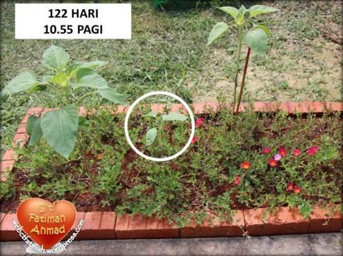 SeriFatima2Hari122