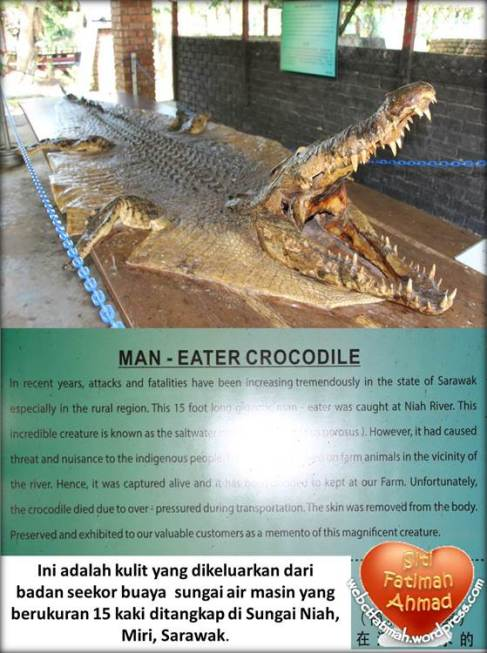 CrocFatima10ManEaterCroccodile
