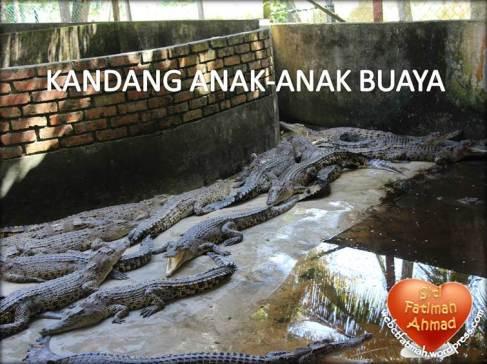 CrocFatima11KandangAnakBuaya