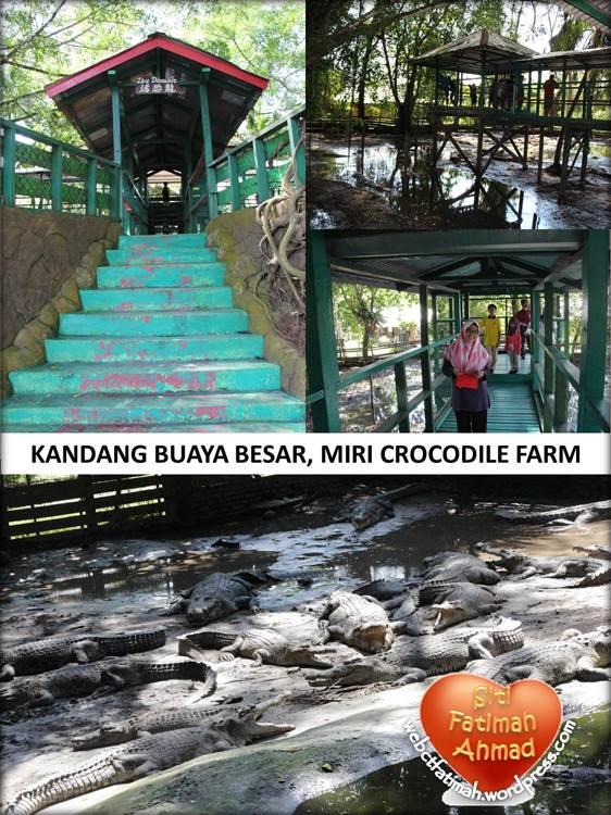 CrocFatima14KandangBuayaBesar