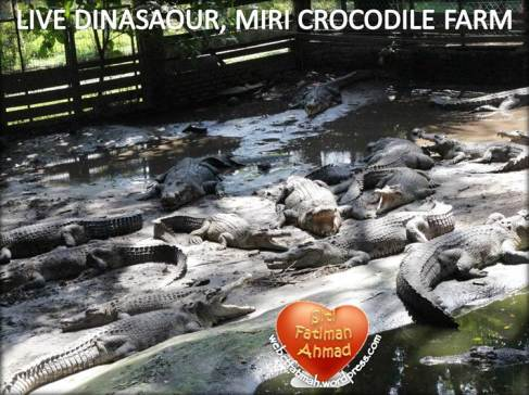 CrocFatima17LiveDinasaour