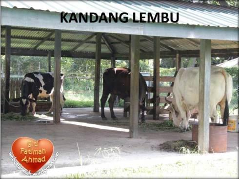 ZooFatima30KandangLembu