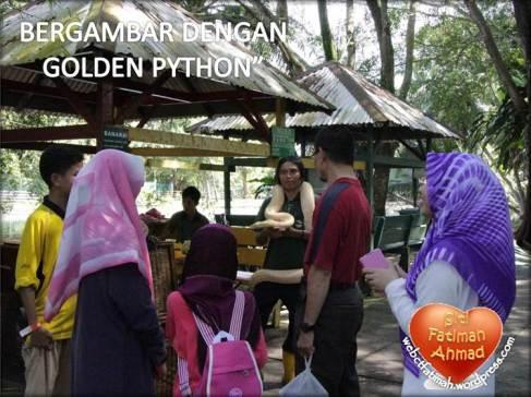 ZooFatima7GoldenPhyton