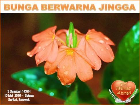 JinggaFatima1BungaBerwarnaJingga