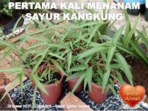 KangkungFatima1pertamakalitanam