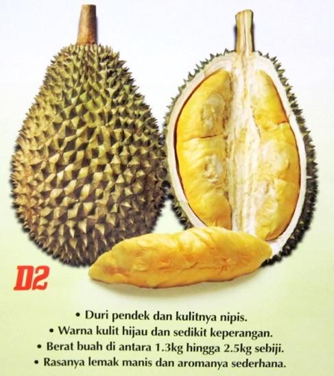 durian-d2isiperang