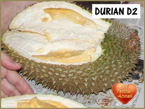 durianfatima9duriand2